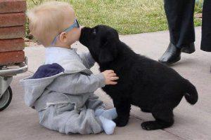 a.baa-Cute-kiss-between-dog-and-ki